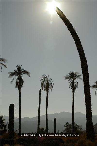 Desert Center (CA, 2006)